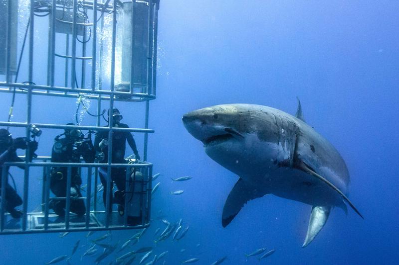 shark-tours
