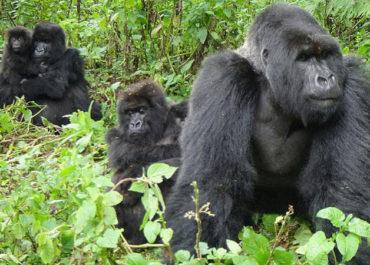 Bwindi Impenertrable Forest