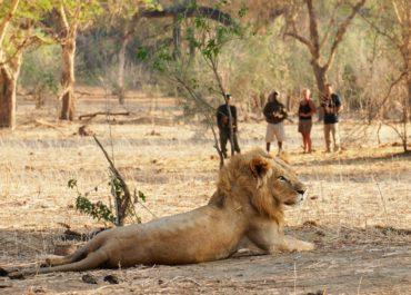 Walking Safaris in Africa